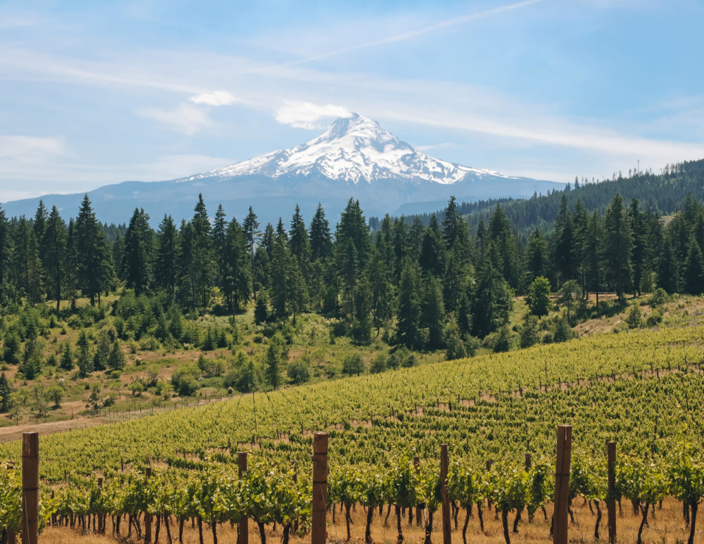 Rolling hills planted with vineyards with forest in the mid-ground and a snow-capped Mount Hood the background